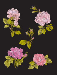 Embroidery. Embroidered design elements with roses flowers and l