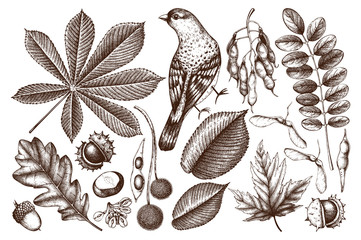 Vintage set of hand drawn leaves and seeds illustration. Vector autumn collection. Wedding invitation. Outlines.