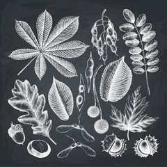 Vintage set of hand drawn leaves and seeds illustration. Vector autumn collection on chalkboard. Outlines.