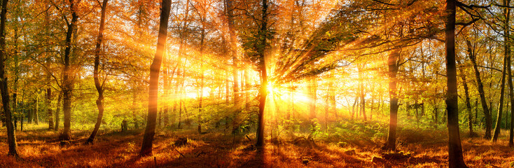 Wall Mural - Herbstlandschaft Panorama: Wald mit goldenen Sonnenstrahlen