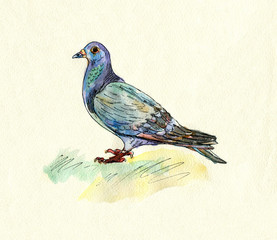 hand drawn watercolor pigeon. Autumn colors.