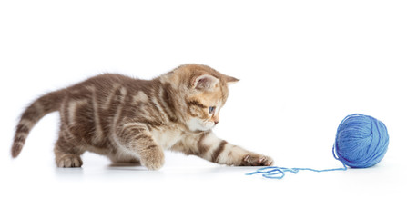 Papier Peint - Young cat playing with blue clew isolated