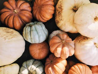 Beautiful Imperfect Pumpkins