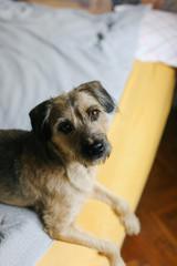 Dog indoor