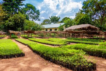 Plant nursery in Uganda Wall mural
