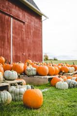 Pumpkins sitting beside a red barn