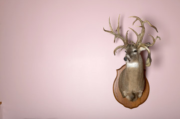 Wall mounted stag head with antlers and copy space