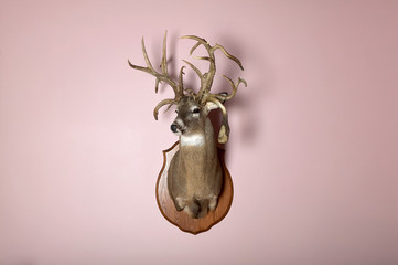 Wall mounted deer head with antlers and copy space