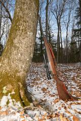 Hunting gun leaning against tree