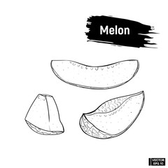 Sketch melon, hand drawing.