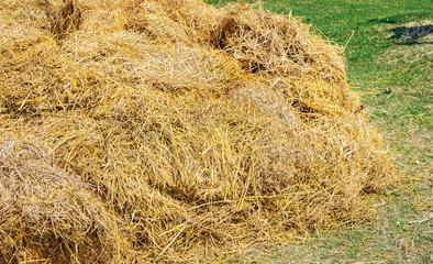 Rice straw in a farm