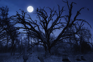 Fotoväggar - This spooky night time Halloween cemetery with a watching owl and full moon makes a great illustration for this holiday season.