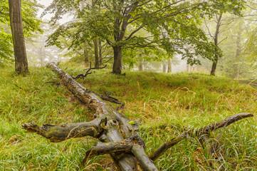Fallen tree trunk in the grass