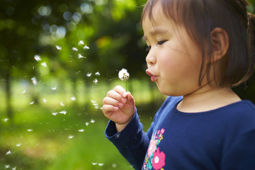 little asian girl blowing dandelion Outdoor