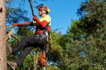 Tree Rider Klettergurt : Bilder und videos suchen: abseilen