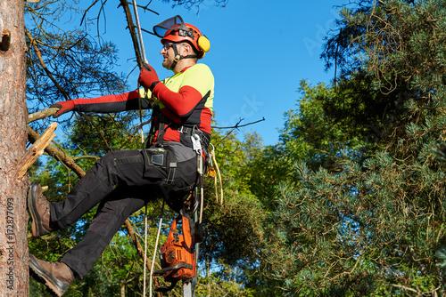Klettergurt 2017 : Baumkletterer mit säge und klettergurt holzfäller bei der arbeit