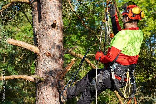 Klettergurt Baum : Baumkletterer mit säge und klettergurt holzfäller bei der arbeit
