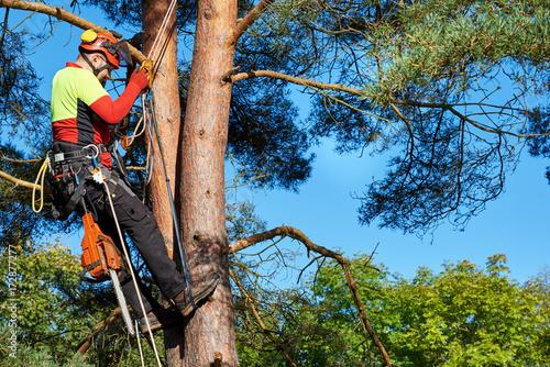 Klettergurt Mit Selbstsicherung : Baumkletterer mit säge und klettergurt holzfäller bei der arbeit