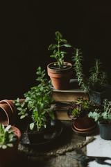 Plants still life