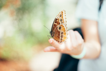 Brown Butterfly Resting On Fingertip Of Young Blonde Woman
