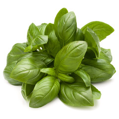 Wall Mural - Sweet basil herb leaves bunch isolated on white background