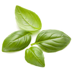 Wall Mural - Sweet basil herb leaves handful isolated on white background closeup