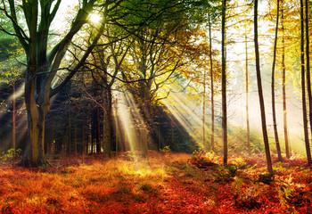 Herbstwald, Lichtung im Nebel