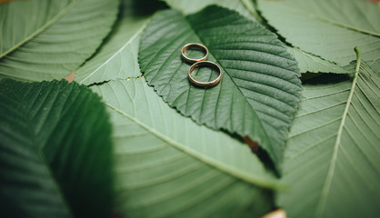 Wedding jewelry.  Golden wedding rings . Wedding ring with space for text. Stylish wedding rings on beautiful fresh green leaves of a plant love concept. Rings on a tree branch.