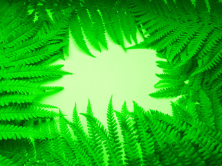 beautiful frame, bright composition, floral natural fresh background of green fern foliage