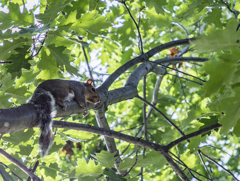 squirrel at the tree