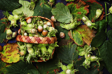 Fall background with hazelnut and filbert leaves, top view