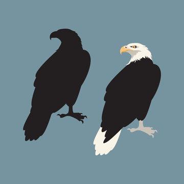 eagle vector illustration style flat black silhouette