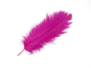 Colorful Artificial Feather Shot on White Background