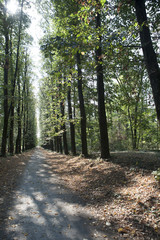 Viale boschivo