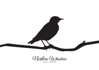 Vector illustration: Silhouette of Northern Wheatear sitting on a dry branch.