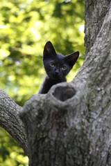 やっと木登りができた子猫(クロネコ)