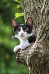 木の上のハチワレ子猫