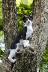 木を登る途中で一休みする、シロクロ子猫