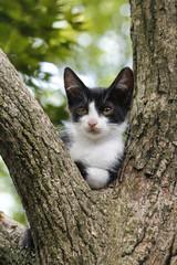 木の上でくつろぐシロクロ子猫