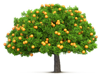 orange tree isolated 3D illustration