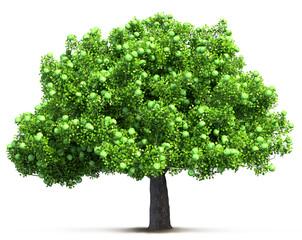 green apple tree isolated 3D illustration