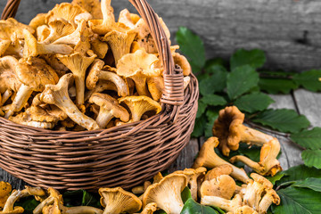 Fresh chanterelles mushrooms in a basket on wooden table