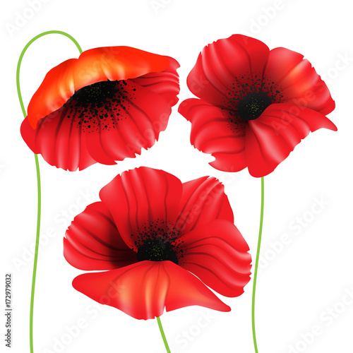 Beautiful realistic poppy flowers poppies set isolated on white beautiful realistic poppy flowers poppies set isolated on white background vector mightylinksfo