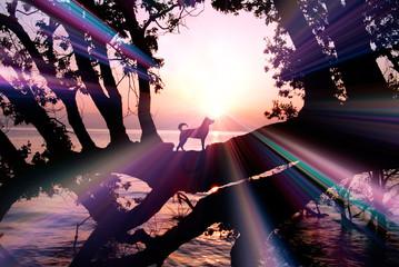 夜明けの湖畔と犬のシルエット