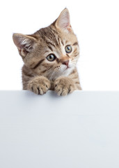 Funny cat kitten peeking out of a blank sign, isolated on white background