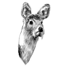 musk deer sketch vector graphics head black-and-white monochrome pattern