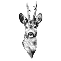 deer sketch vector graphics head black-and-white monochrome pattern