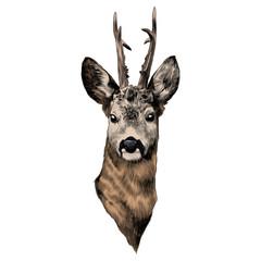deer sketch vector graphics head colored drawing