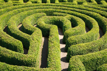 Green bushes maze view from above for garden.