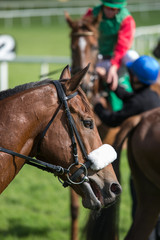 Side profile portrait of a racehorse on the race track